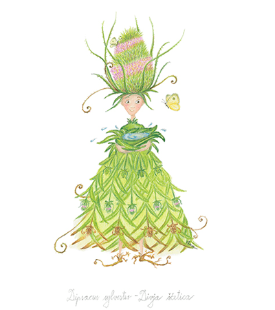 teasel botanic fairy