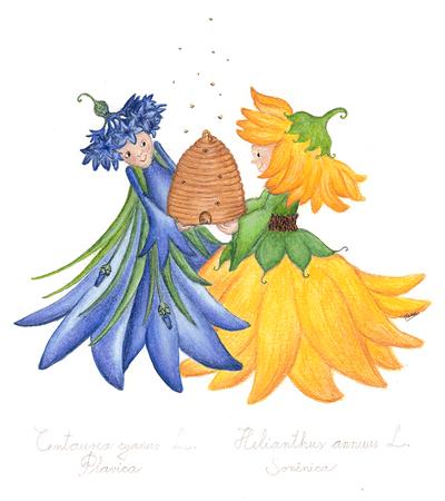 plavica sončnica botanična vila